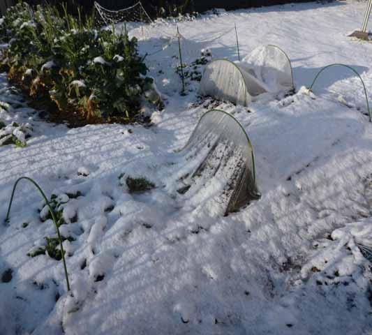 100202雪.jpg