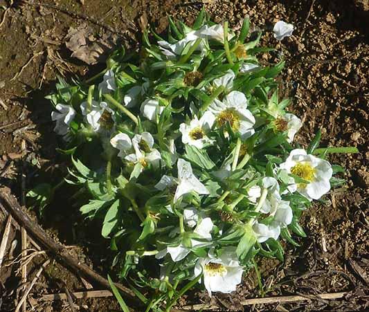 141206廃棄した花.jpg