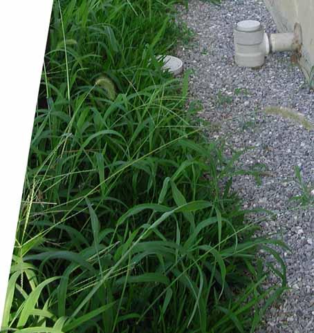 090813裏芝刈り前.jpg
