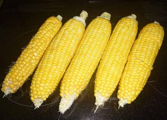 140726トウモロコシ収穫.jpg