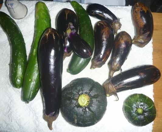 141019夏野菜収穫.jpg